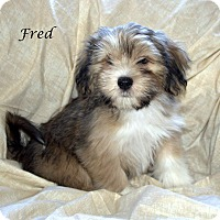 Adopt A Pet :: Fred - Yuba City, CA