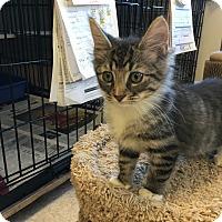 Adopt A Pet :: Miguel - Island Park, NY
