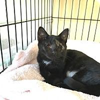 Adopt A Pet :: Nikita - Island Park, NY