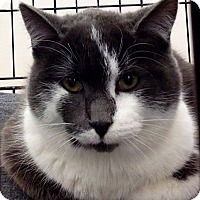Adopt A Pet :: Marley - Chesterfield Township, MI