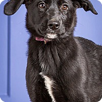 Adopt A Pet :: Miley - Owensboro, KY