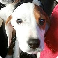 Adopt A Pet :: She-ra - E. Greenwhich, RI