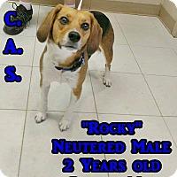 Adopt A Pet :: 1-12 Rocky - Triadelphia, WV