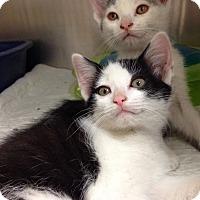 Adopt A Pet :: Petco C - Triadelphia, WV