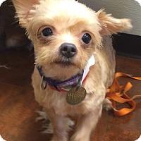 Adopt A Pet :: Barbie - Oak Ridge, NJ