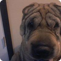 Adopt A Pet :: Botox - Chambersburg, PA