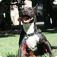 Adopt A Pet :: Tia - Worcester, MA