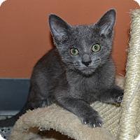 Adopt A Pet :: Chelsea - Michigan City, IN