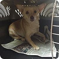 Adopt A Pet :: Ronny ($200 adoption fee) - Washington, DC