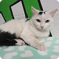 Adopt A Pet :: 16C-1483 (11/26) - Rome, GA