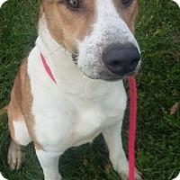 Adopt A Pet :: TITAN - Wintersville, OH