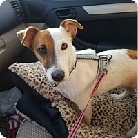 Adopt A Pet :: Cassie in San Antonio - San Antonio, TX