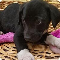 Adopt A Pet :: Lillie - Decatur, AL