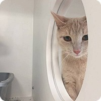 Adopt A Pet :: Jughead - THORNHILL, ON