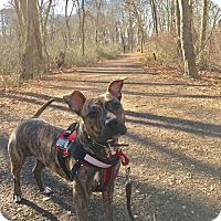 Adopt A Pet :: Zoey - Huntington, NY