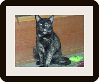 Calico Cat for adoption in Medford, Wisconsin - PETALS(ADOPTION ONLY $40)