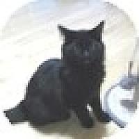 Adopt A Pet :: Ace - Vancouver, BC