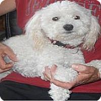 Adopt A Pet :: Tico (Teeko) - Palmyra, WI