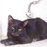Adopt A Pet :: Chi - Alexandria, VA