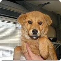 Adopt A Pet :: Sydney - Alexandria, VA
