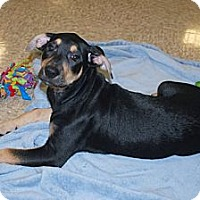 Adopt A Pet :: Courtney - Minneola, FL