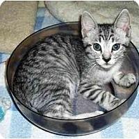 Adopt A Pet :: Sheeza - Irvine, CA