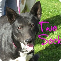Adopt A Pet :: Two Socks - Scottsdale, AZ