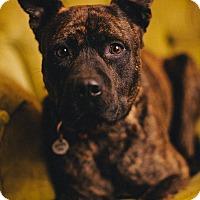 Adopt A Pet :: Monty - Portland, OR