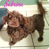 Adopt A Pet :: Sabrina - House Springs, MO