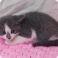 Adopt A Pet :: Enzo - Muskegon, MI