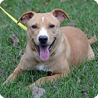Adopt A Pet :: Ginger - Charlemont, MA