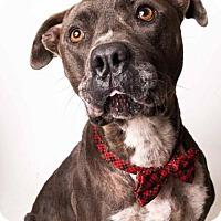Adopt A Pet :: *MERLOT - Sacramento, CA