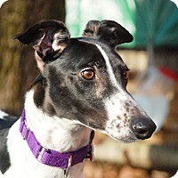 Adopt A Pet :: Sparkle - Ware, MA