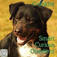 Adopt A Pet :: Cronkite - Washburn, MO