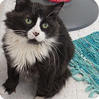 Adopt A Pet :: Pandie - Chambersburg, PA