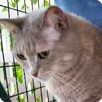 Adopt A Pet :: Maggy - Coral Springs, FL