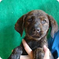 Adopt A Pet :: Tang - Oviedo, FL