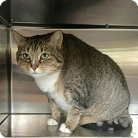 Adopt A Pet :: Cupcake - Webster, MA