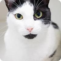 Adopt A Pet :: Dakota - Atlanta, GA