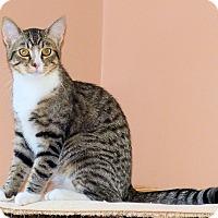Adopt A Pet :: Sylvester - Morganton, NC