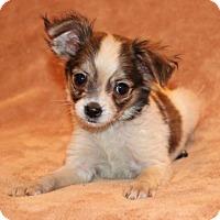 Adopt A Pet :: Roxie - Modesto, CA