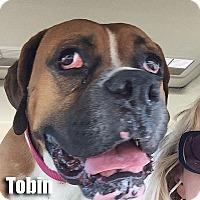Adopt A Pet :: Tobin - Encino, CA
