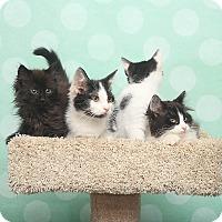 Adopt A Pet :: Kakia - Chippewa Falls, WI