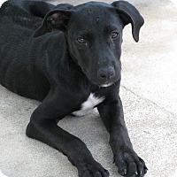Adopt A Pet :: Thelma - Groton, MA