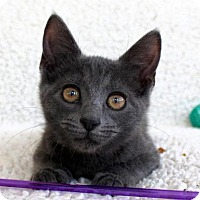 Adopt A Pet :: I'M MAIKA! I HAVE A NUB NUB! - jacksonville, FL