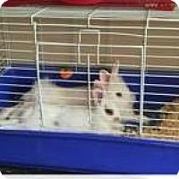 Dwarf for adoption in Egg Harbor City, New Jersey - Harper & Haley