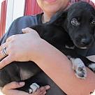 Adopt A Pet :: Wakonda