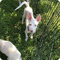 Adopt A Pet :: Aidan - Sugar Land, TX