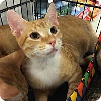 Adopt A Pet :: Rocky - Boynton Beach, FL