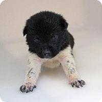 Adopt A Pet :: Rita - Chester Springs, PA